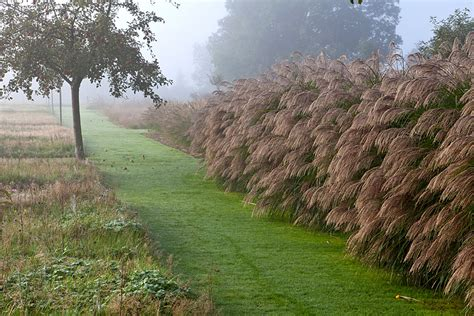 Le Jardin Plume Automne Autumn  Le Jardin Plume