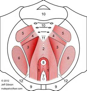 pelvic floor advanced and bodywork