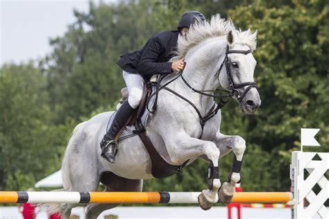 pferdesport arten vom gallop bis zur dressur