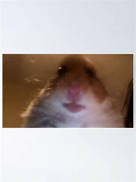hamster picture   jpg kinesisk dvaerghamster skoetsel och fakta