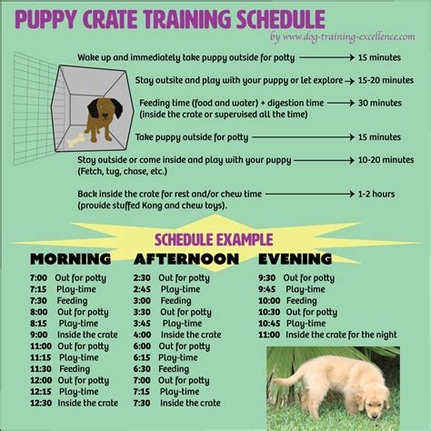 free printable puppy crate schedule the best solution to potty your and