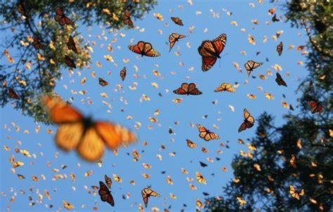 lock screen butterfly wallpaper orange aesthetic butterfly