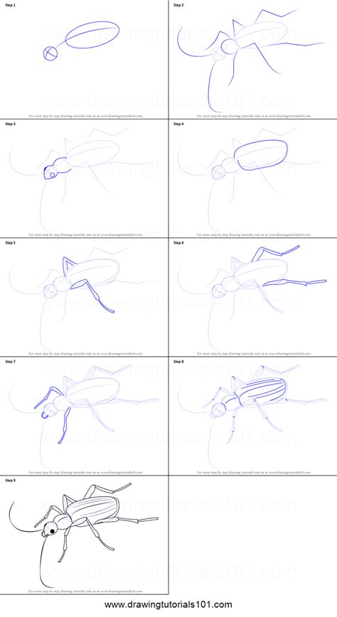 draw  bombardier beetle printable step  step