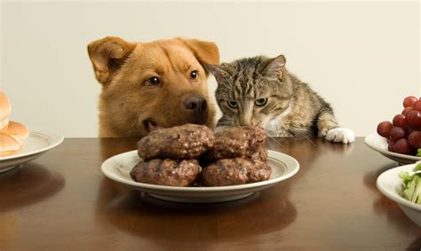 table food for dogs labor day tips pet poison helpline