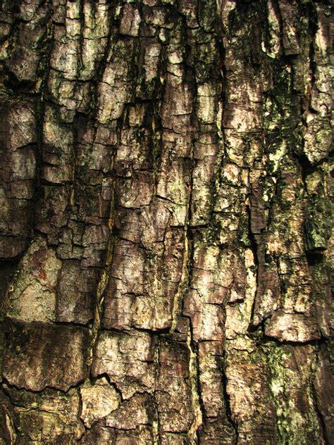 tree bark texture tree bark texture texture pinterest tree bark and photo texture