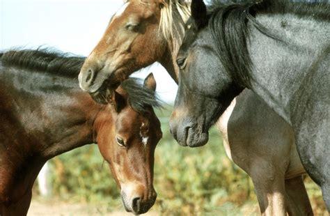 horses sleeping kuda berdiri horse tidur tienda habits hipica sambil mengapa sun caballo schlafen pferde head bededag facts caballos frps