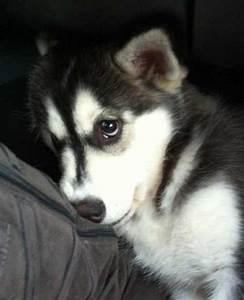 Sad puppy | Craft Ideas | Pinterest