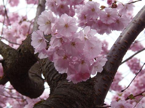 Free Images : tree nature branch flower petal bloom