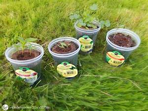 Planting With Kids - Plant Parts And Needs