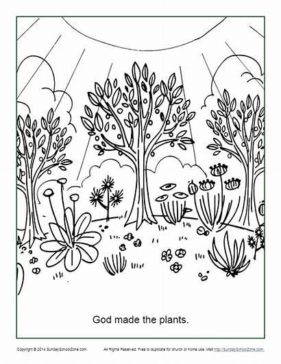 Coloring Plants God Activity Pdf