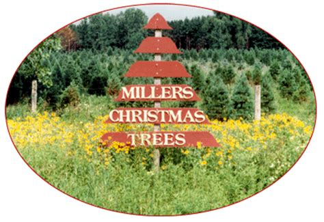 miller s christmas tree farm