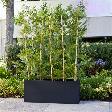 plant privacy screen bamboo grove privacy screen in modern fiberglass planter 96in l x 12in w x 72in h outdoor rated