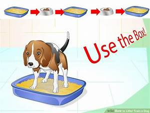 how to litter train a dog with pictures wikihow gtgt 18 With how to train a dog to use the bathroom outside