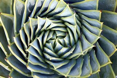 Succulent Spiral Wallpapers Succulents Waste Desktop Daily