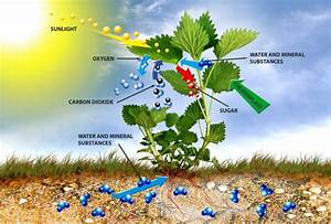 Illustration Of Photosynthesis