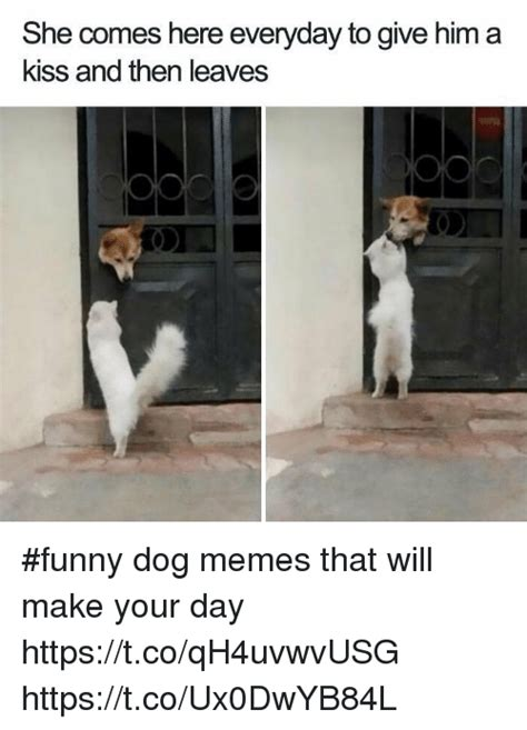 Kiss Me Dog Meme - 25 best memes about funny dog memes funny dog memes