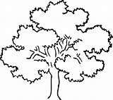 Tree Oak Coloring Drawing Awesome Line Drawings Designlooter Getdrawings 82kb 533px Paintingvalley Luna sketch template