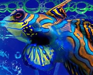 Colorful Fish Digital Art by Serena Ballard