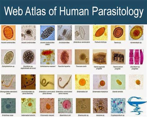 web atlas  human parasitology medical laboratory