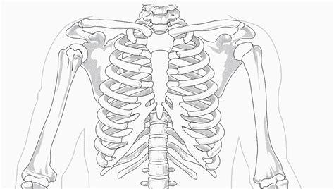 gabbia toracica anatomia anatomia della gabbia toracica biopills