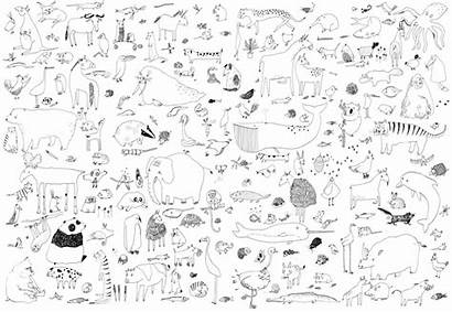Poster Animal Colouring Scobie Lorna Illustration Wall