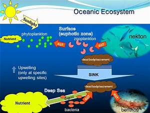 Drawn ocean marine ecosystem - Pencil and in color drawn ...