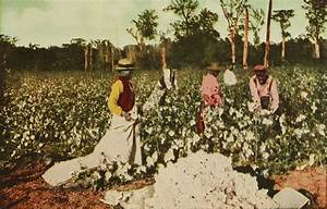 Wiki: Plantation - upcScavenger