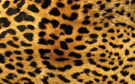 Animal Print Wallpapers For Free - 42 best free animal print wallpapers wallpaperaccess