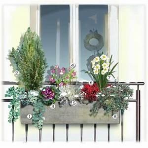 Plantes D Hiver Extérieur Balcon : plante hiver balcon pivoine etc ~ Nature-et-papiers.com Idées de Décoration