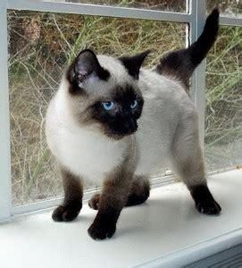 die fellfarben der katze tierfreund