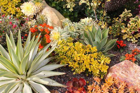DEETER BUCKNER DESIGN, LLC: Magnificent, Mature Succulent Gardens - Michael Buckner - San Diego
