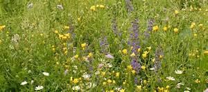 Warum Sind Pflanzen Grün : lieber von hier warum gebietseigene pflanzen kologisch so wertvoll sind mellifera e v ~ Markanthonyermac.com Haus und Dekorationen