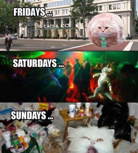 images  pet memes  pinterest cats dump