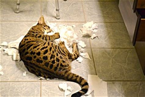 cat proof toilet paper holder
