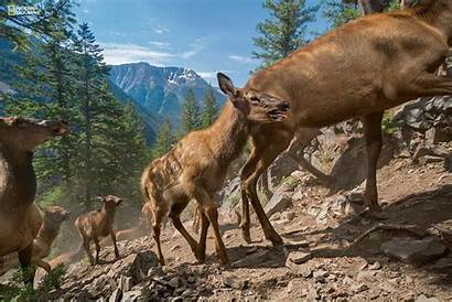 Geographic National Yellowstone Dedicates Entire Issue Park