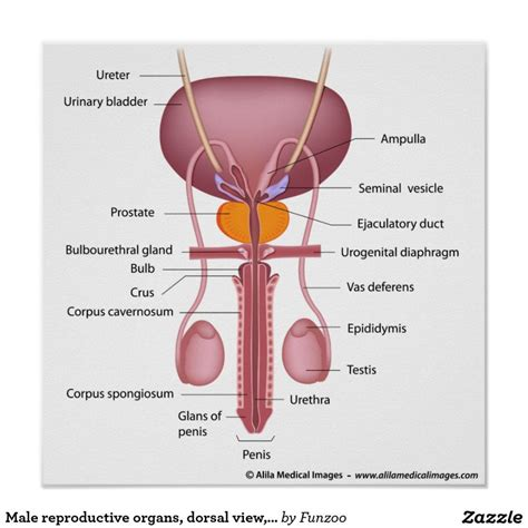Diagram Of The Reproductive System Male And Female Of Pig. Assisted Living Facilities In Melbourne Fl. T Mobile Prepaid Review Batch Data Processing. Treatment For Fecal Incontinence. Hardening Of Arteries Treatment. Background Checks In India Anaheim Bail Bonds. Bp Oil Spill Litigation David Smith Insurance. Mit Sloan Acceptance Rate Drupal Vps Hosting. Spinal Disc Herniation Symptoms