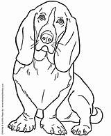 Coloring Dog Pages Hound Basset Dogs Printable Sheets Sheet Puppies Honkingdonkey Pet Bassett Colouring Adults sketch template