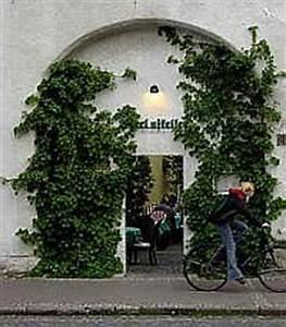 Immergrüne Kletterpflanzen Schattiger Standort : kletterhortensie kletter hortensie ~ Michelbontemps.com Haus und Dekorationen