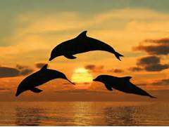Dolphins jumping over ...