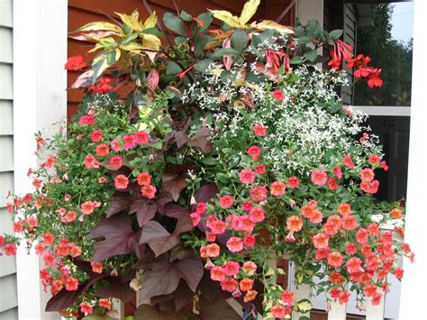Container Gardening : How To Design A Container Garden
