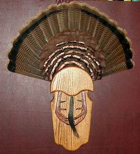 turkey fan tail beard spur mounting kit oak barn wood With turkey fan mount template