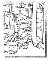 Coloring Forest Habitat Pages Animal Printable Drawing Trees Tall Books Habitats Tree Visual Adult Jungle Print Getdrawings Arts Popular Io sketch template