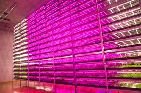 indoor farming led lights world s largest indoor farm is 100 times more productive