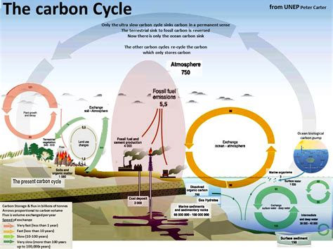 Define Carbon Sink Geography by Science