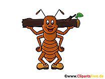 insekten bilder cliparts illustrationen gratis