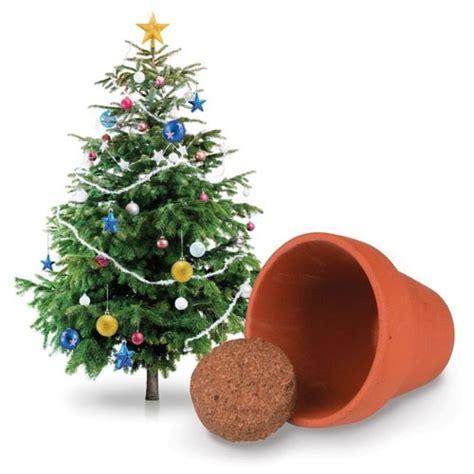christmas tree growing kit grow your own tree kit yuppie gadgets