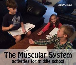 Stem Club  The Muscular System