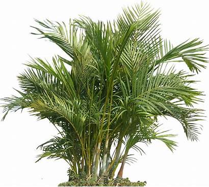 Plants Tropical Plant Transparent Pngkit Automatically Start