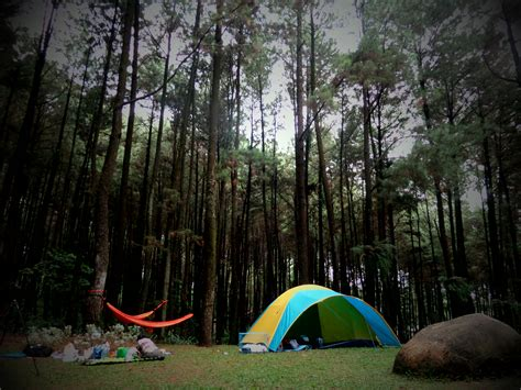 menikmati kesegaran hutan pinus  gunung pancar