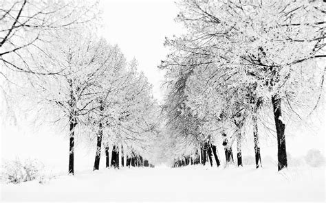 Black And White Winter Wallpapers (32 Wallpapers) Hd